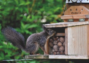 How To Keep Squirrels From Damaging Your Plants and Bird Feeders